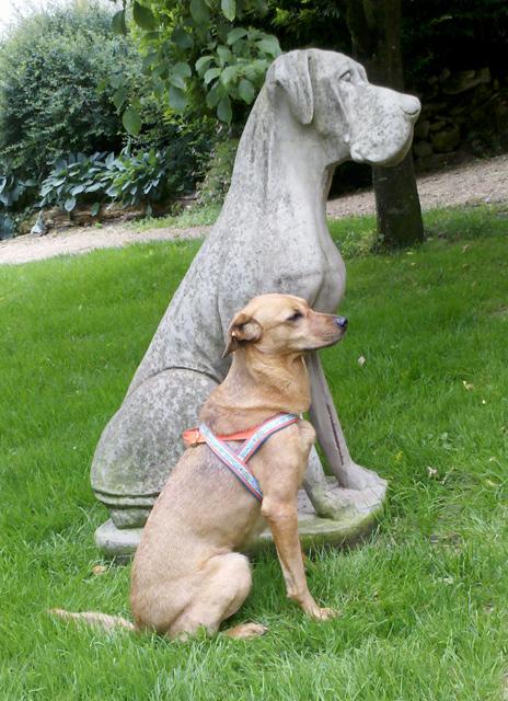 Hundegeschirr (Norwegengeschirr), Kreativ-Ebook   Weitere   Ebooks ...